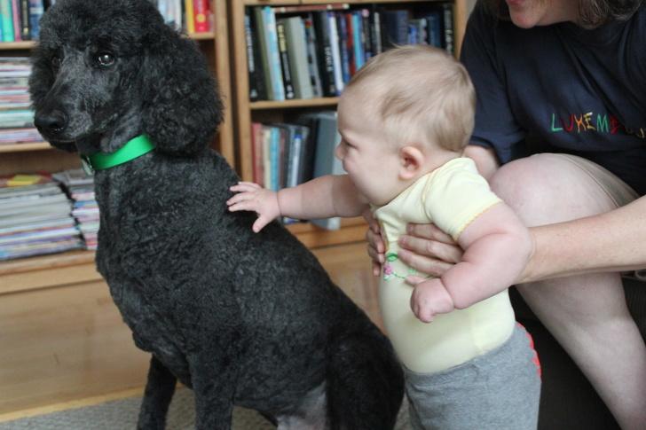 7隻「毛孩英雄」證明每個人都該養寵物!這隻內建「渣男偵測」