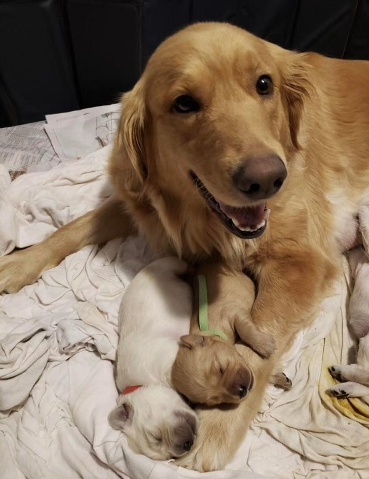13張「讓你甘心當媽寶」的動物暖心照 大熊身上「掛兩隻小熊」最溫馨!