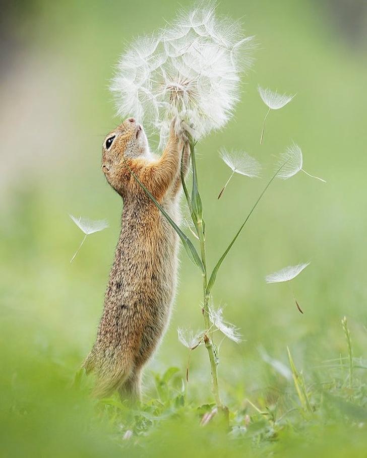 20張魔法攝影師的「超夢幻童話系」動物美照 狐狸「幫同伴拍照」超可愛!