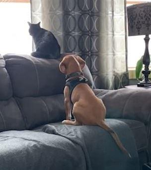 毛茸茸好朋友「窗邊搭肩看風景」 貓皇「尾巴亮點」融化網友:超傲嬌❤