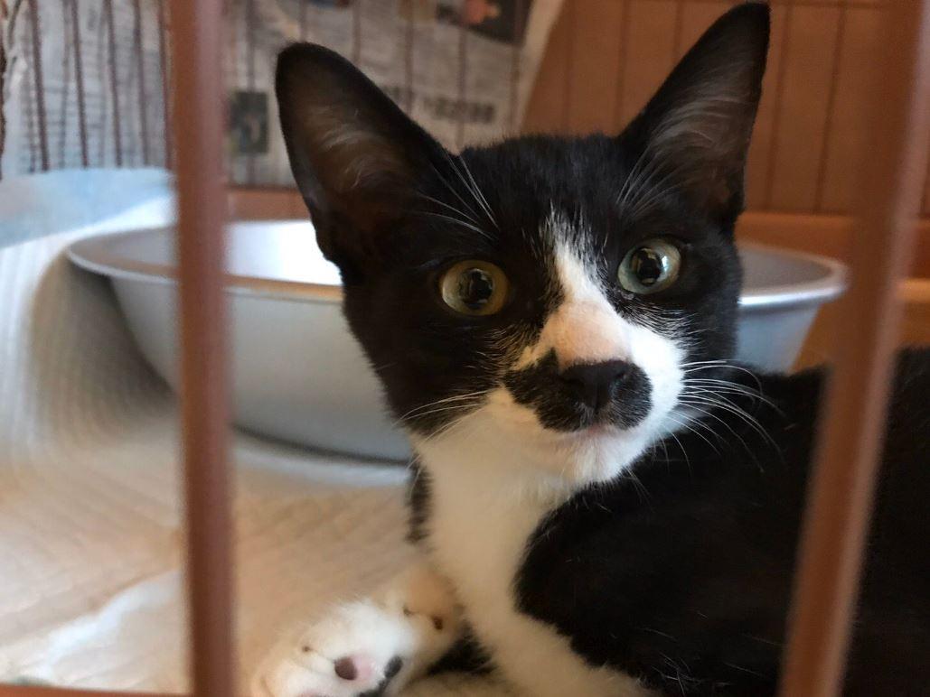 這隻貓不尋常!仔細看臉上「還有一隻小貓」呆萌死了…奴才發現秒收編