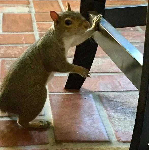 愛犬過世超難過!小松鼠突然「來敲門」...隔天又報到:我來當你朋友