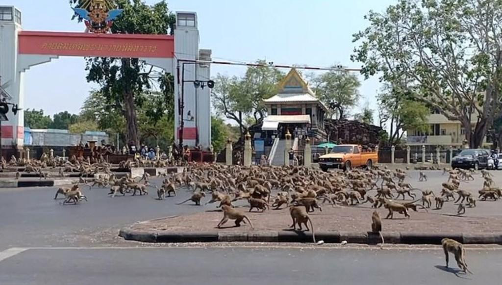 泰國「上百隻猴子」爆衝搶食!業者曝「武肺爆發」是關鍵:害牠們瘋了