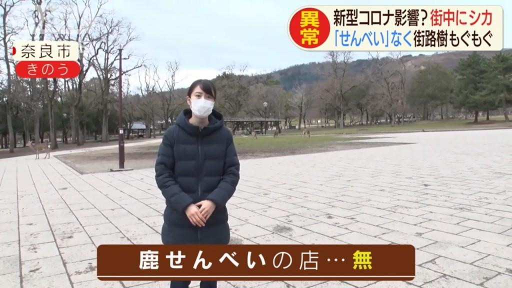 奈良鹿「爆衝到市區」吃光居民盆栽 因武肺「沒遊客餵食」餓瘋了!