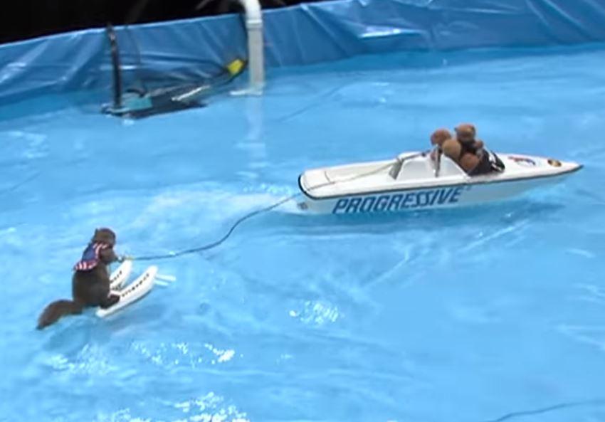 影/美國滑水賽竟「派出松鼠」 仔細看「船長身影」網友吐奶:來征服地球?