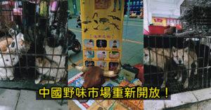 外媒爆中國「野味市場已開」民眾湧入進補 當局:「已無確診」盡快恢復生活!