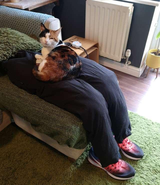 主子愛躺大腿「甜蜜負擔太重」怎麼辦?神夫妻「自製假腿」讓牠隨便躺