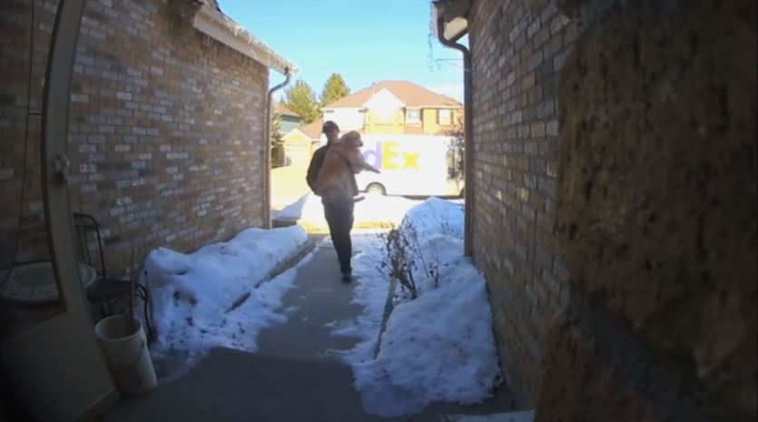 3歲金毛偷溜出去玩「被快遞員半路攔截」送回家:您有27公斤包裹!