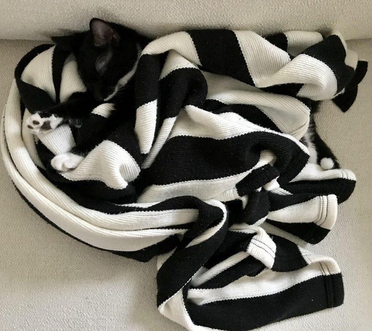 20隻認真起來「連媽媽都找不到」的職人級躲貓貓動物!