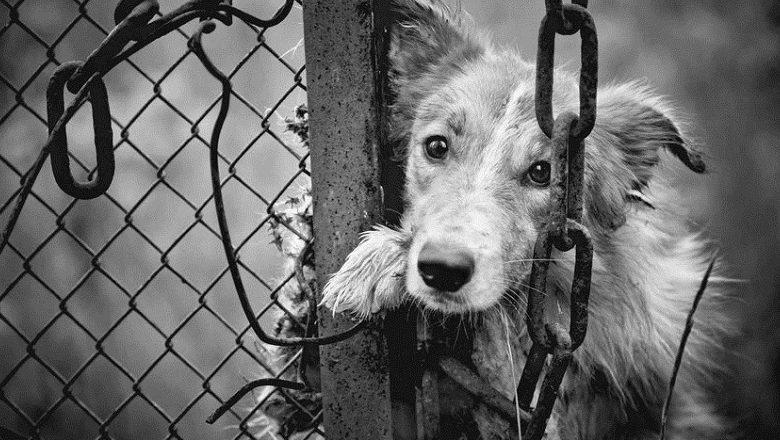 虐貓狗重罰200萬「公寓不得禁養寵物」 新法增罰「吃貓狗」民眾疑:也禁吃牛羊?