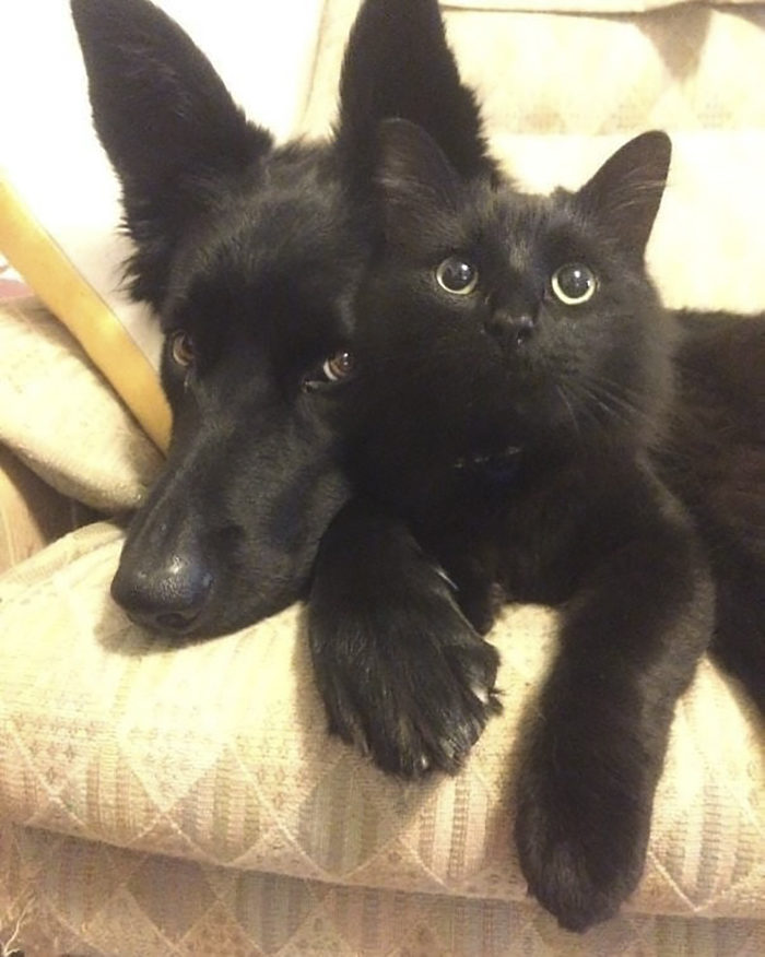 40張證明「愛黑貓才是人生真理」的強力証據❤