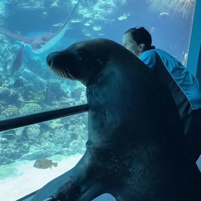 影/水族館因武肺關閉!飼育員「帶海獅參觀」欣賞「美味晚餐」背影超嗨