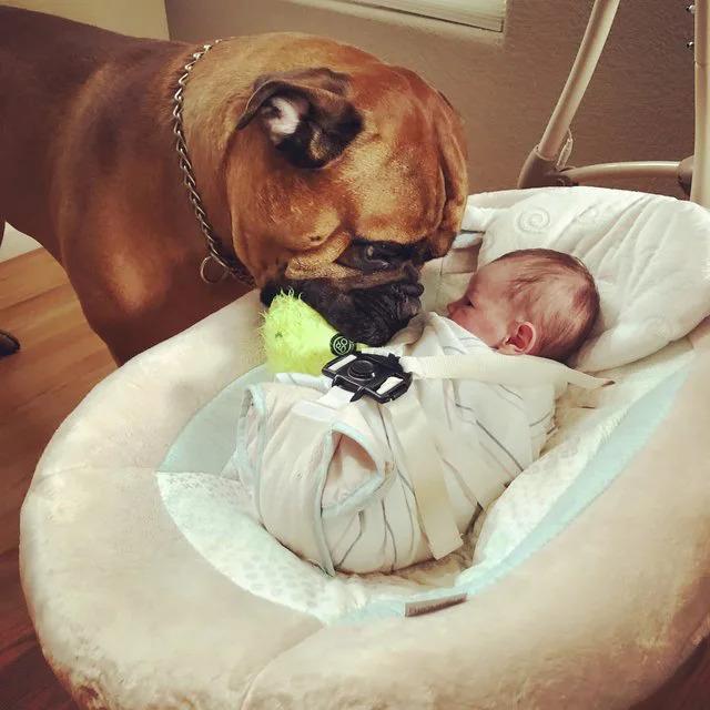 柔情大狗狗「叼自己最愛玩具」給爆哭的小主人:玩這個心情會變好❤