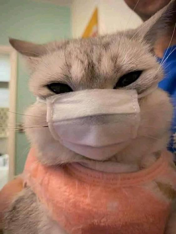 圖/20隻比人類還懂防疫的「自主隔離貓」 陽台演唱會不能沒有牠!