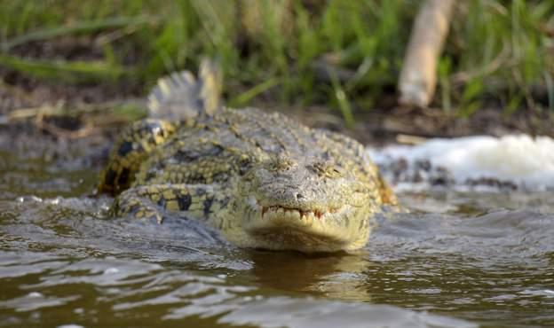 不甩居家隔離禁令「堅持去釣魚」!男子成鱷魚美味大餐