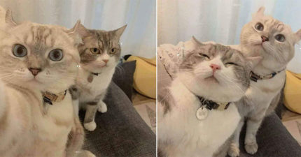 萌貓咪自拍滿滿「+9情侶」既視感 若無其事「看遠方」有夠專業!