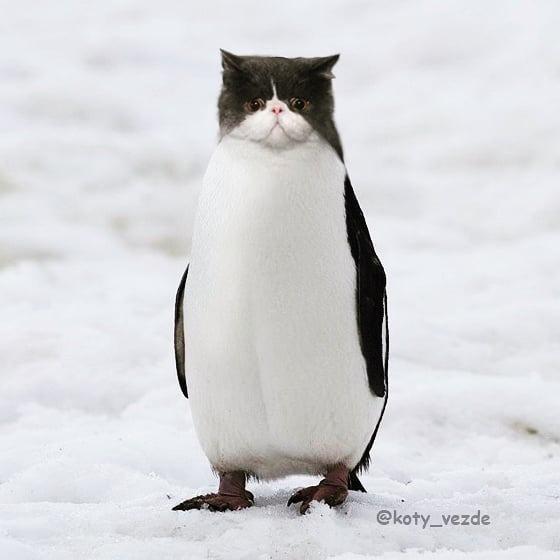 藝術家「把所有動物P上貓臉」萌度破表 「草泥貓」可愛又霸氣!