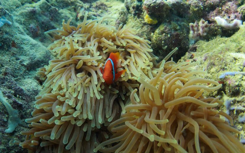 珊瑚礁20年內消失!科學家證實「氣候暖化」太嚴重:1/4海洋生物受威脅