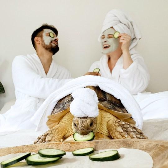 網紅烏龜跟主人「穿情侶裝」放閃 一家人「敷面膜」畫面超萌!