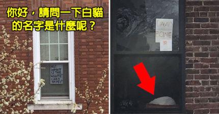 隔離中最美緣分❤女網友「手寫大字報」問鄰居貓名 幾小時後回應了!