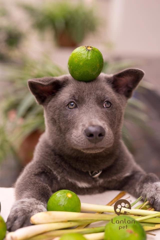 小黑狗「頭頂蔬果」超呆萌爆表 面對青椒「表情逐漸母湯」!