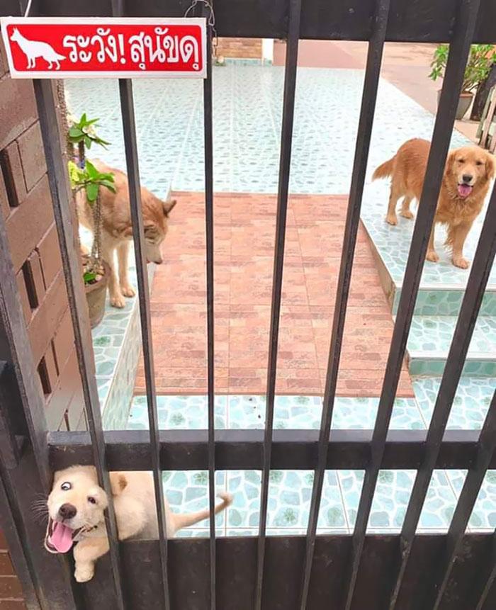 30隻「被主人抹黑」的溫柔狗狗 惡犬警告「背後的反差萌」網友秒融化❤