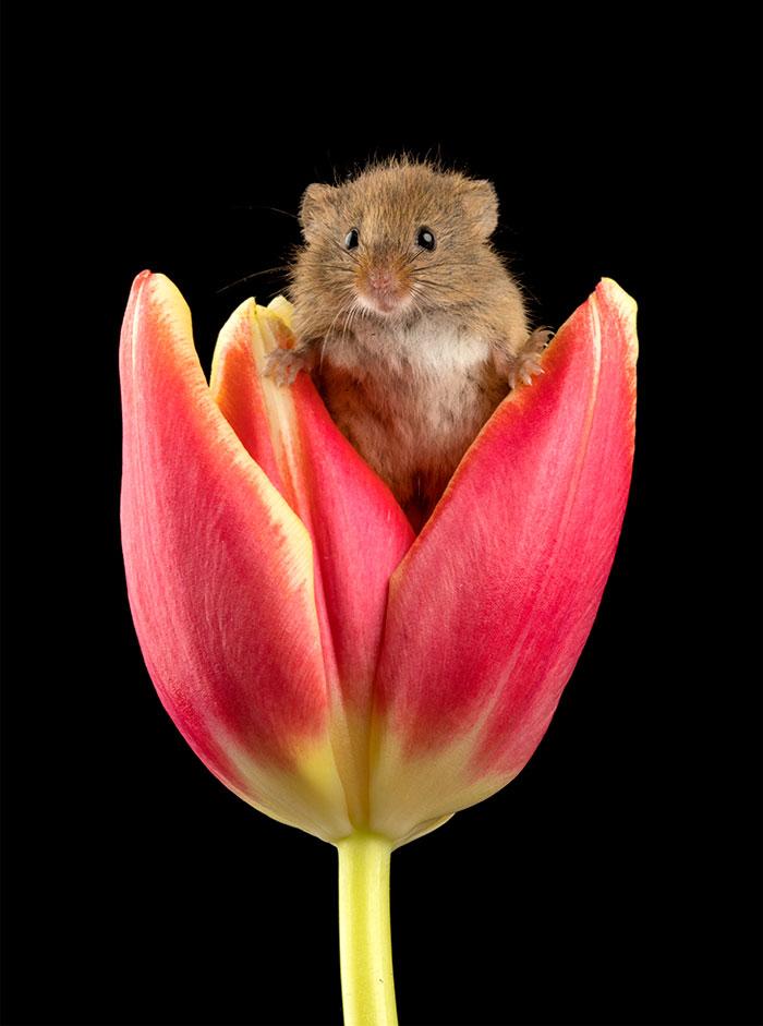 小巢鼠「偷吃被抓包」可愛爆擊 滿臉「都是證據」讓你一秒就融化!
