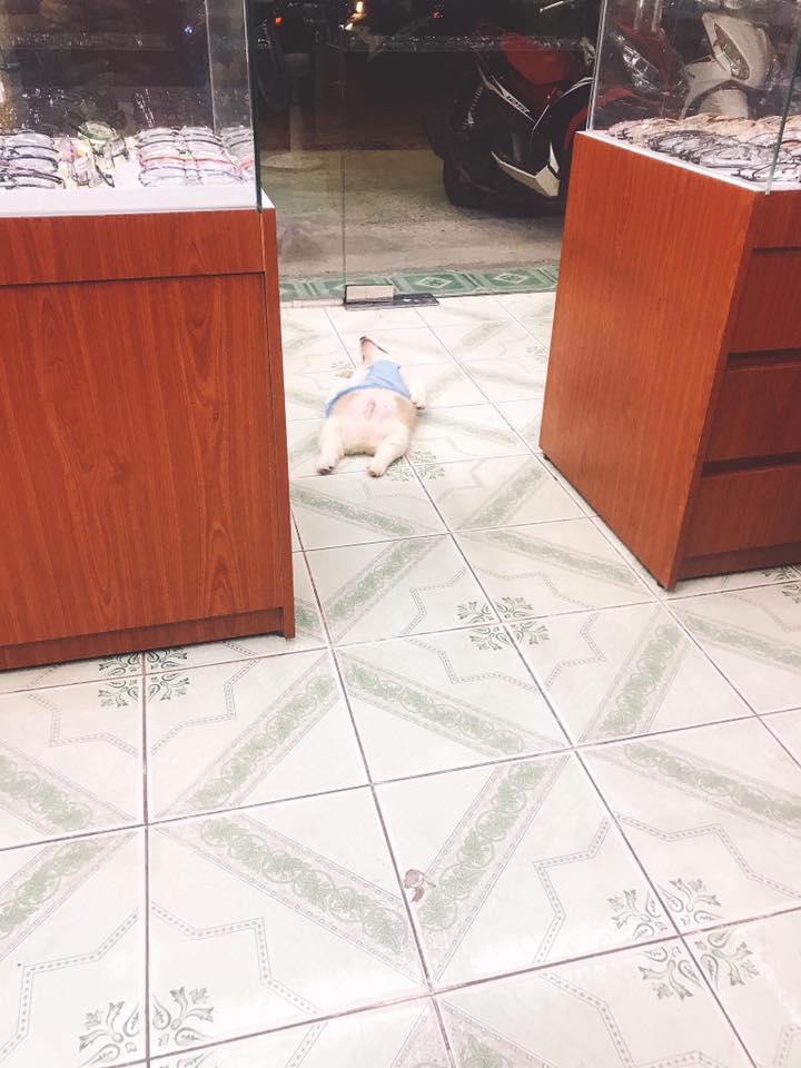 他到家發現柯基「倒臥紅泊」崩潰嚇哭 下秒發現「凶器」秒笑翻!