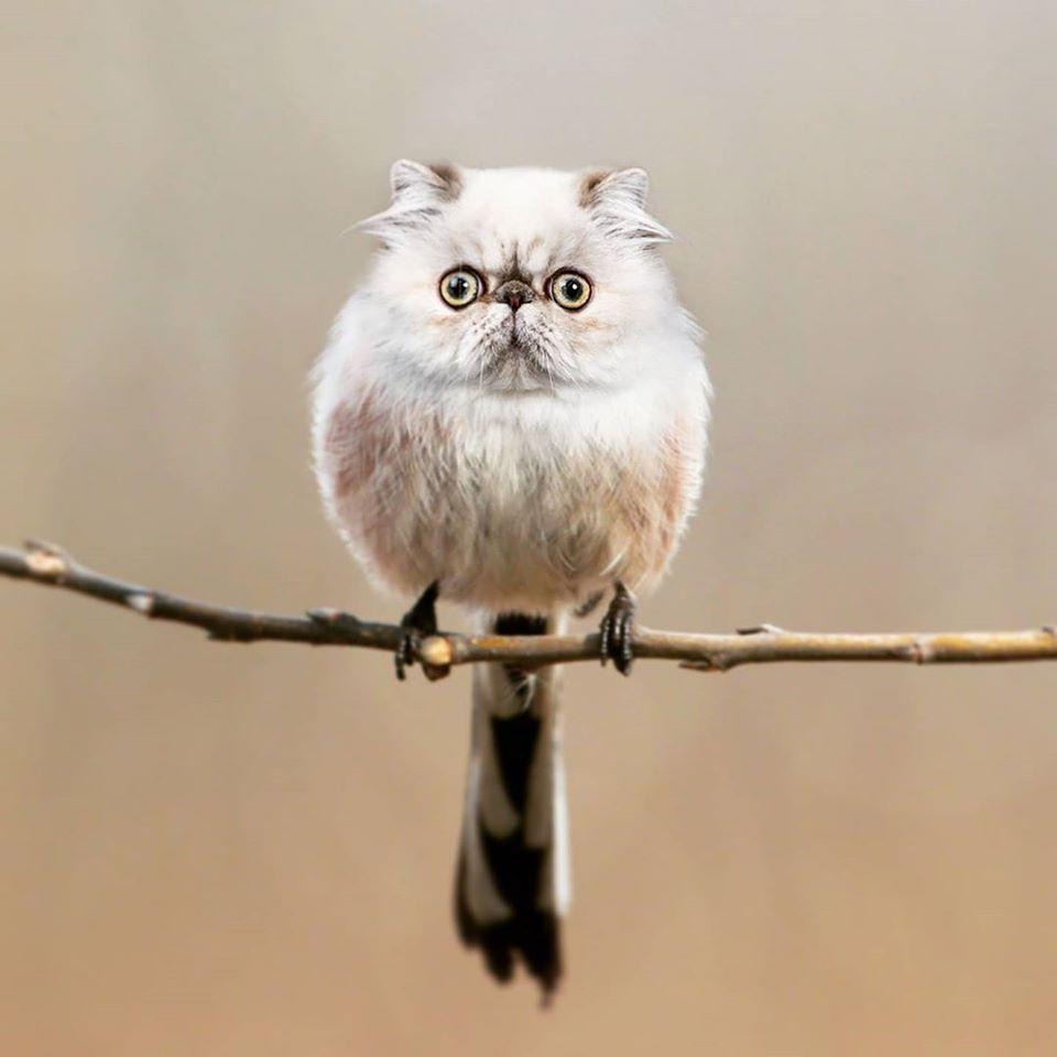 藝術家把動物的頭「P上鳥身體」成品超獵奇 巴哥鳥太恐怖!