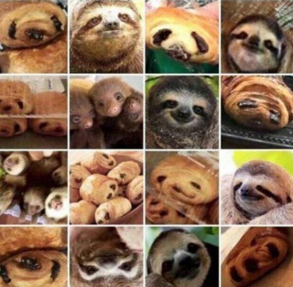 10種「一眼以為是食物」的爆笑撞臉動物 「小狗冰淇淋」超美味!