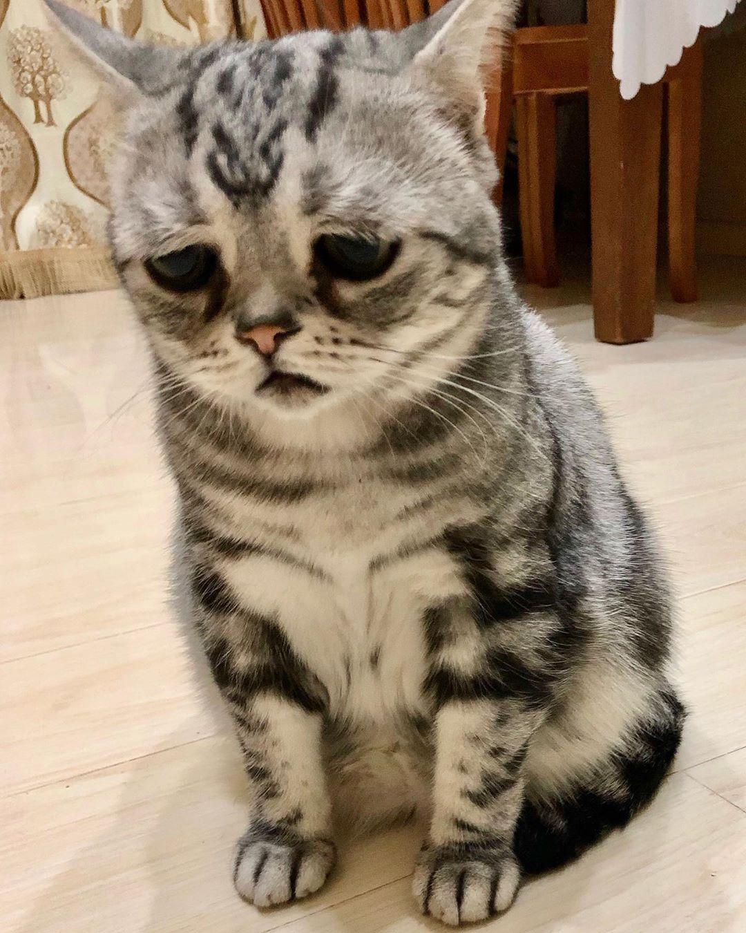 全世界「最哀怨的貓咪」 吃罐頭也是「哭哭臉」融化16萬粉