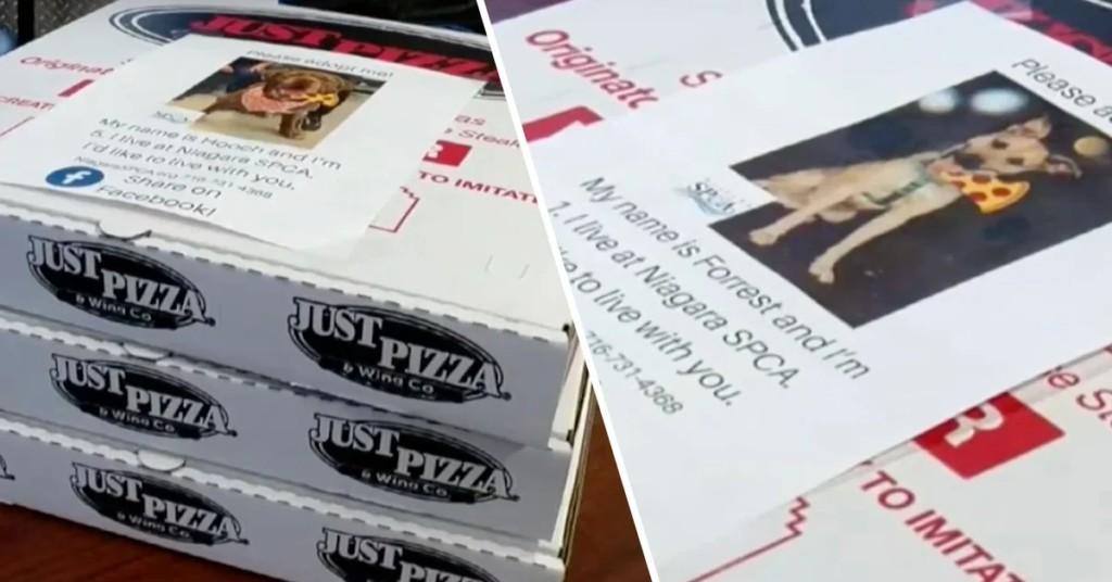 披薩盒「附狗狗領養資訊」大受歡迎 願意「把毛孩帶回家」還有額外獎勵!