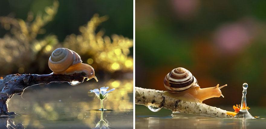 攝影師專拍「近距離蝸牛寫真」美到像童話 小蝸牛撐傘是奇蹟照!
