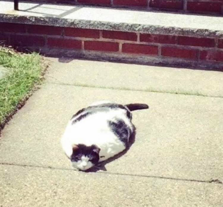 25張我們精選的「貓咪獵奇醜照」 手晃到「變恐怖大嘴」太爆笑