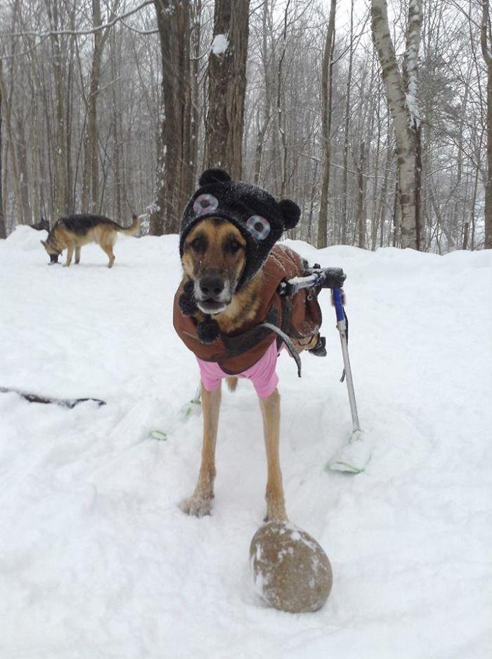 善心女為「上天堂的愛犬」多養6隻狗 全是「輪椅狗」只為聽到最懷念聲音!