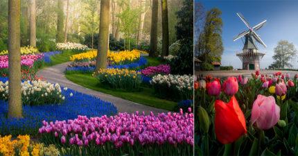 「世界最美花園」開71年首度關閉 攝影師:這才是真實樣貌!