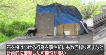 81歲爺阻止虐貓被報復 「5人約圍毆」浪貓再也等不到他回家