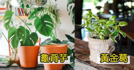 10種「對身體超好」的室內植物 夫妻必買「茉莉花」!