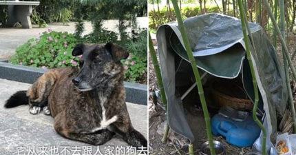 忠犬被拋棄「原地苦等主人3年」意外成為鄰居的破冰大師