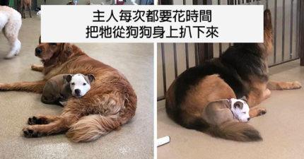 小萌犬超愛「黏著同伴一起睡」畫面超暖 管理員打臉:牠心機很重!