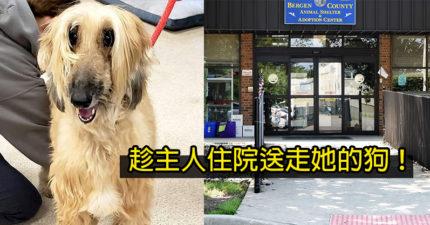趁主人住院「偷送走9年愛犬」 收容所:狗跟新主人會比較幸福