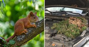 松鼠媽「偷蓋秘密基地」1/3引擎被佔據 附上「4個小驚喜」讓車主樂翻!