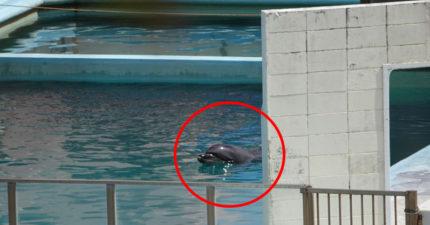 在廢棄水族館「2年沒人理」 世界「最孤獨海豚」默默水池離世