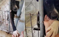 超愛「跟路人握手」的缺愛大狗 只要「回牽牠」下秒就融化你!