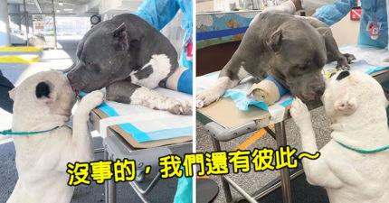 主人在眼前意外「墜谷身亡」 狗狗只能「互相舔淚」超心疼
