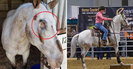 勇敢馬罹病摘雙眼「卻看得更清楚」參加比賽完全沒問題!