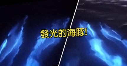 《阿凡達》海豚現身!自帶「夢幻藍光」水面興奮跳躍