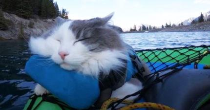 影/帶貓皇去急流泛舟牠「全程都在睡」:罐頭開了再叫我...