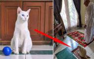 貓咪太愛祈禱!主人乾脆買「迷你禮拜毯」給牠:終於不會被打擾了