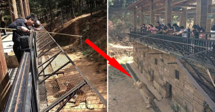影/中國動物園推「85塊釣老虎」引眾怒!管理員:有專人指導